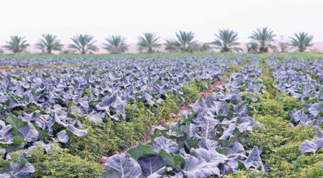 Qatar tops Arab world in food security