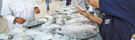 الكويت تعزز الأمن الغذائي الإقليمي